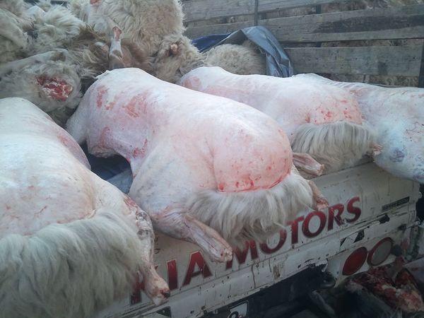 Хонины ууцын үнэ ханш