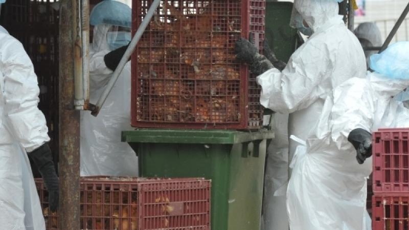 Н5N1 вирусийн хүний өвчлөл бүртгэгдээгүй гэв