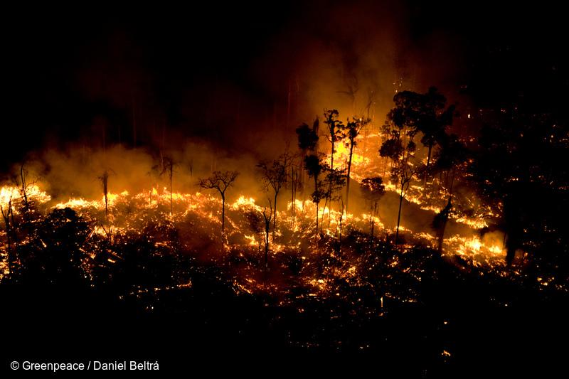 Амазоны ширэнгэн ойд 21 хоногийн турш түймэр гарч байна