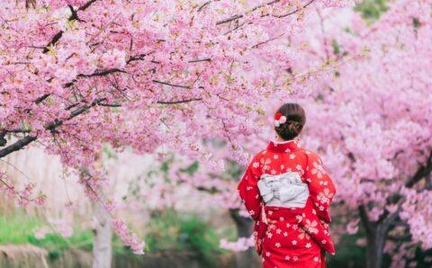 Японы интоорын мод сүүлийн 1200 жилд байгаагүй эрт цэцэглэжээ