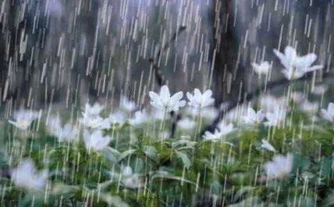 Ойрын хоногуудад уулархаг нутгаар дуу цахилгаантай аадар бороо орно